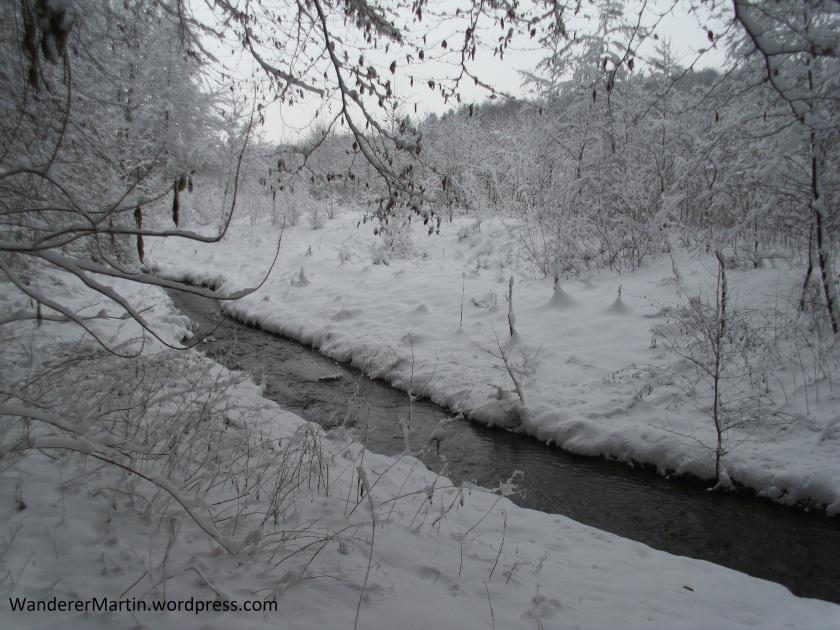 Die Hase im Schnee am Kronensee