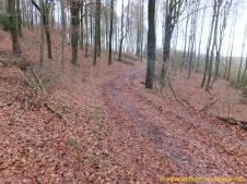 Waldboden-Weg Stempel DSCF1181
