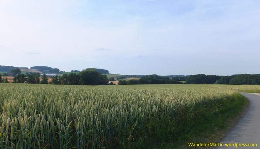 Am Horizont: Der Borgloher Kirchturm