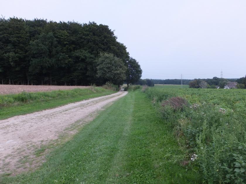 Typisches Landschaftsbild nördlich von Schledehausen
