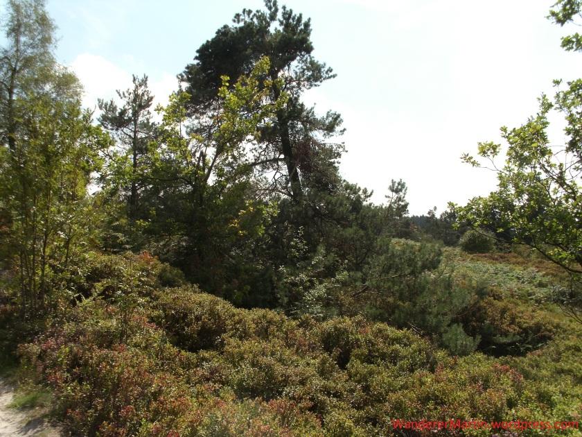 Bergheide auf dem Lippischen Velmerstot