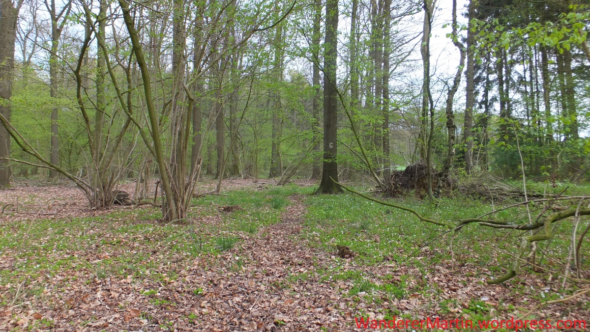 "Gesmold, Dratumer Wald, Gesmolder Ringweg, Etappe ""Dratumer Wald – Bifurkation"""