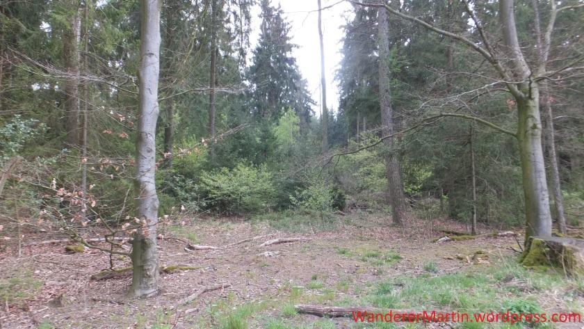 Vereinzelt mischt sich der Laubwald in den Kiefernforst