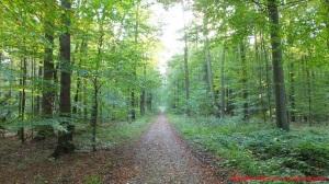 Durch Wald ...