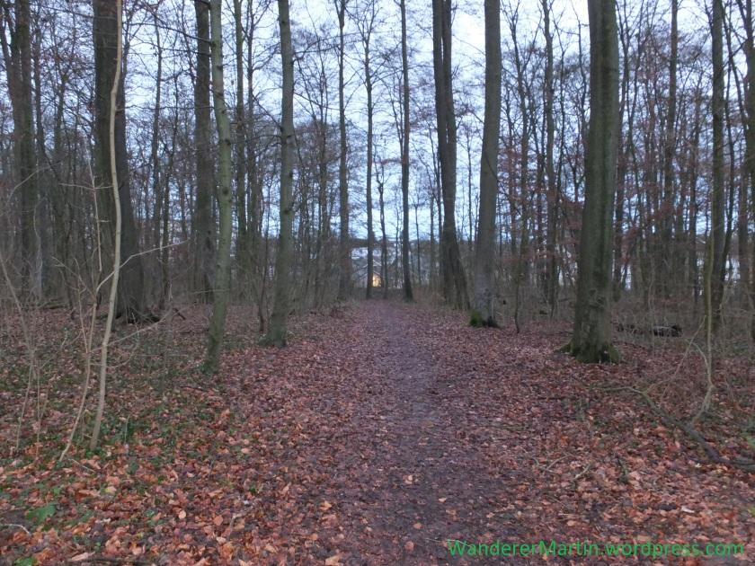 Stadt hinter Wald DSCF4189