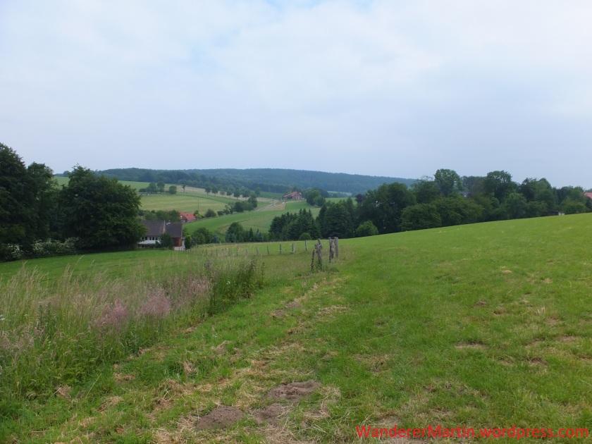 Typisches Landschaftsbild in der Großen Heide