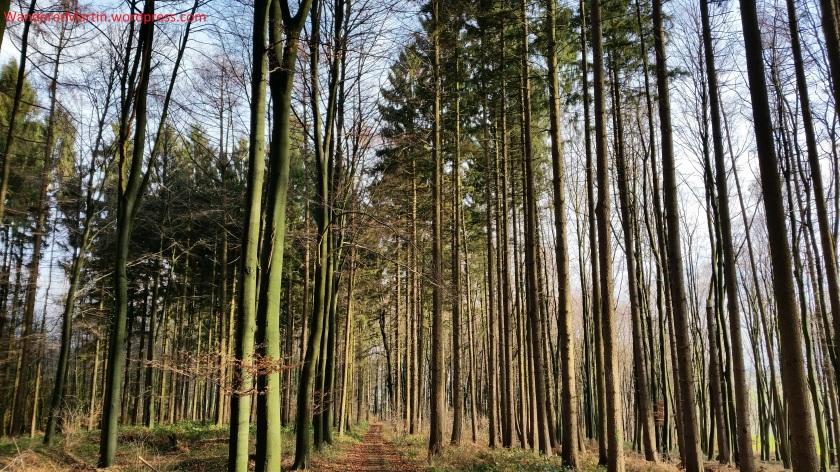 Hochwald Auf der Heue