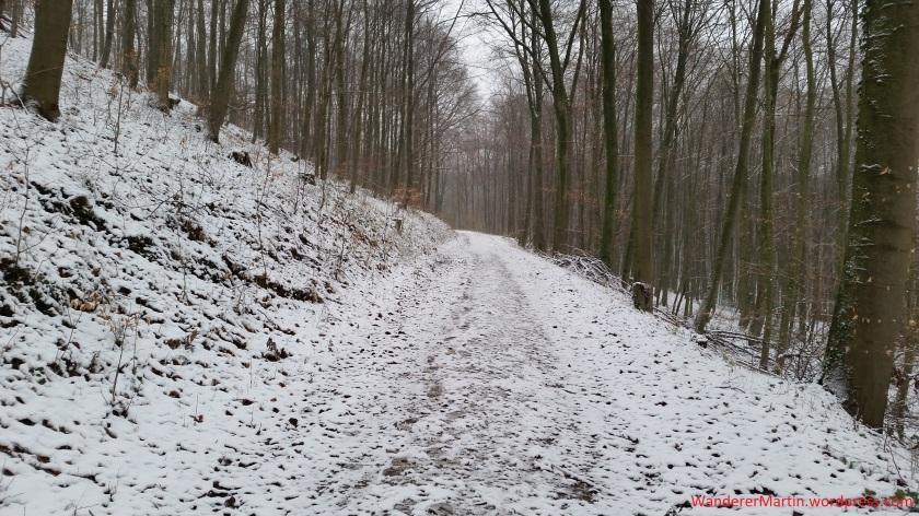 Auch im Winter beeindruckend: der Wald des Barenbergs