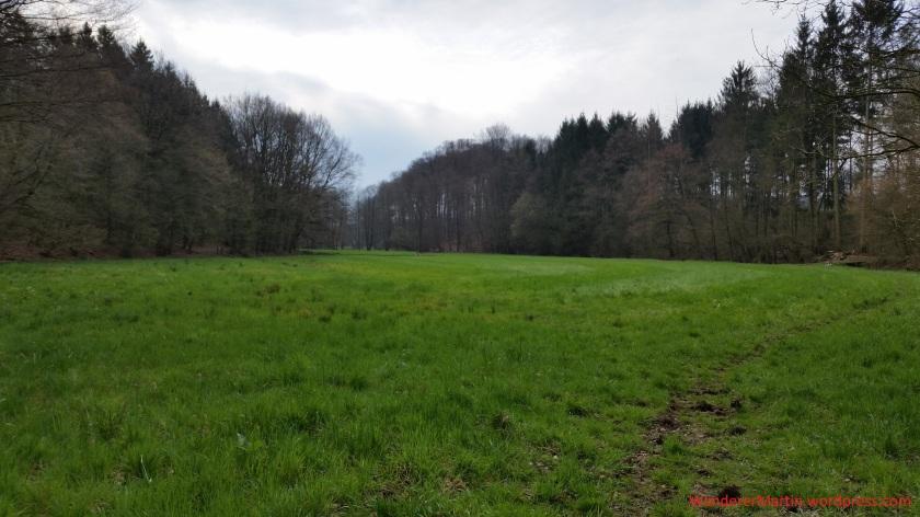 Grünland auf der Talsohle des Beckendorfer Mühlenbachtals. Rechts am Rand des Sieks verläuft der Bach.