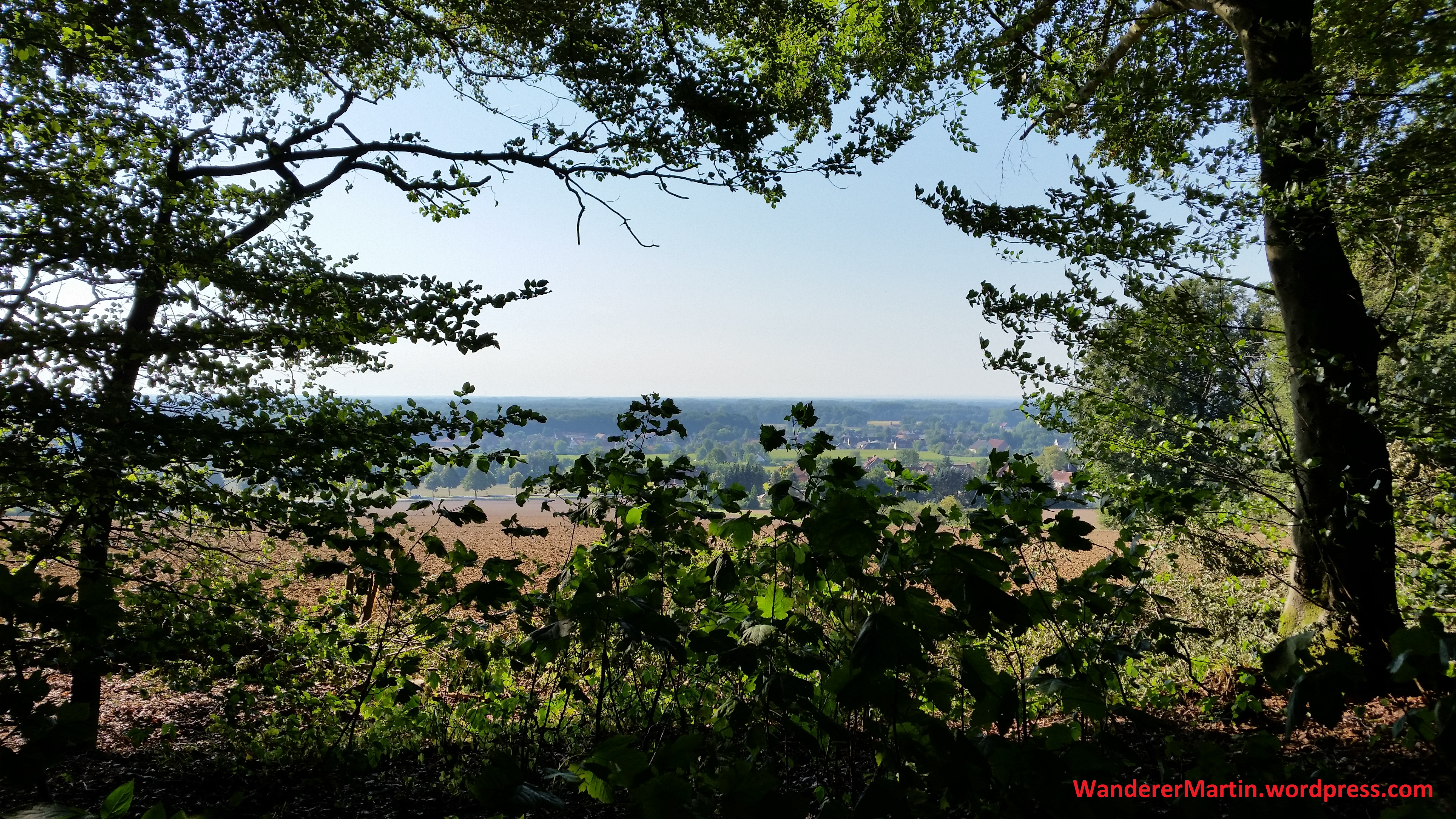 Blick vom Waldrand nach Süden