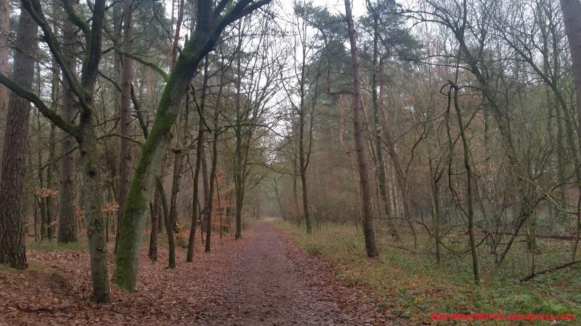 Im Penter Wald 20200125_111936