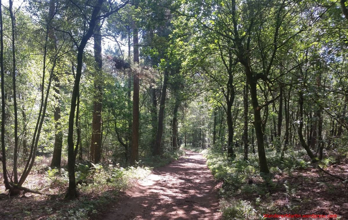 """Riesenbeck, Nasses Dreieck, Hermannsweg, Etappe """"Nasses Dreieck – DörentherKlippen"""""""